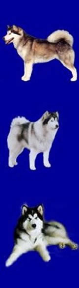 side banner with different Malamutes on it