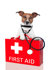 Unexpected drug interactions in Dogs, Rimadyl and Steroids