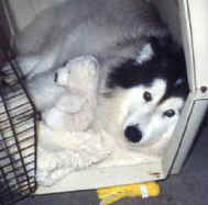 Homer lying in his crate