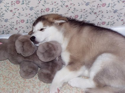 Baby Riggs snuggles on his stuffed hippo