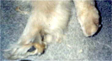 Fuzzy foot and a trimmed foot