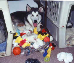Holly has ALL the toys in a pile